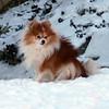 Sami in snow, February 2011