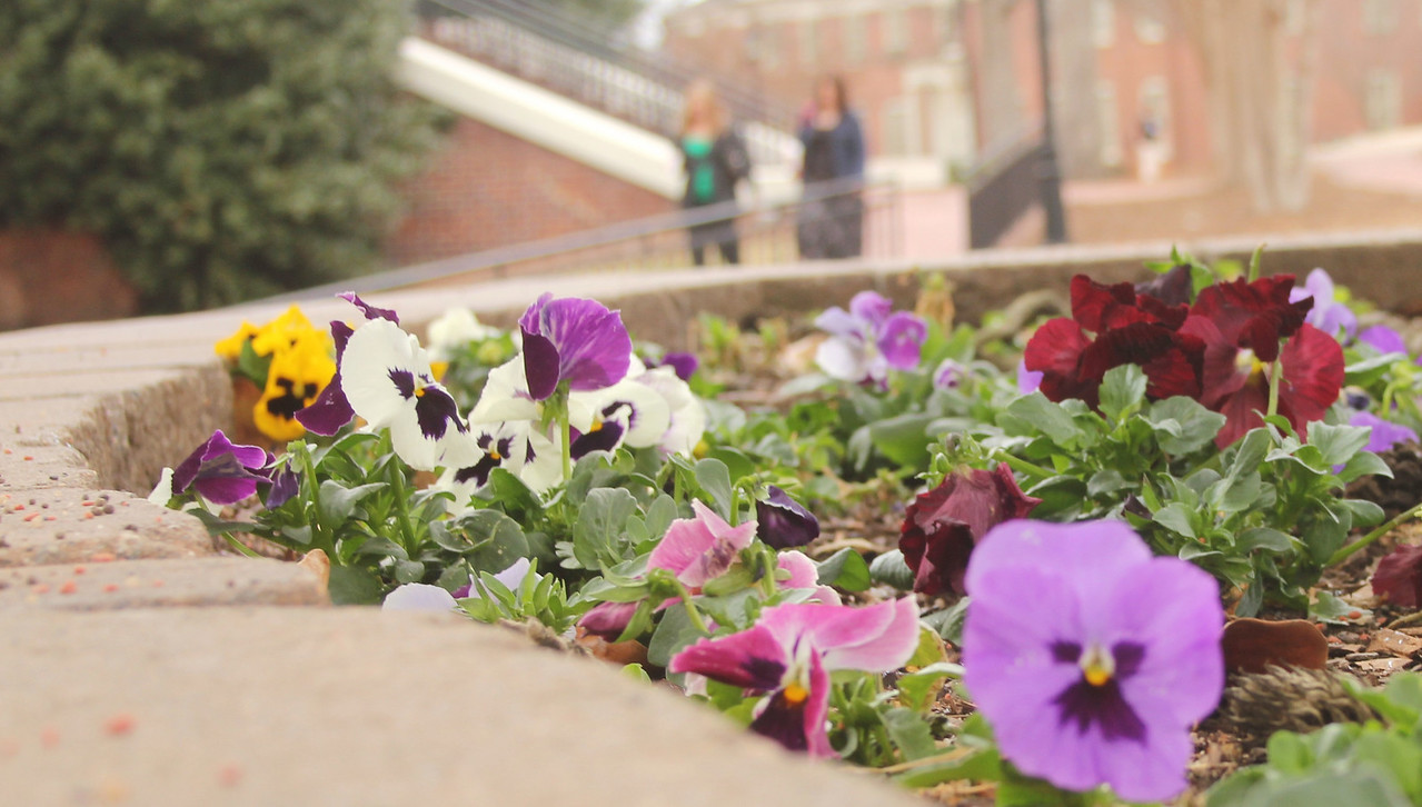 Signs of spring around campus begin to show, as students enjoy their walk to class.