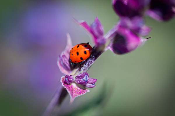 I followed this lady bug around for a while but it was really hard to get her in focus