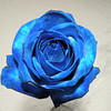 A blue rose... I swear on the honor of Oscar's mother that I did NOT enhance this!  We found these at the BX floral shop - dyed of course... but soo pretty :)