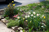 _MG_6588 flower garden