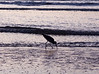 Shorebird on beach