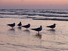 Gulls on beach at dawn