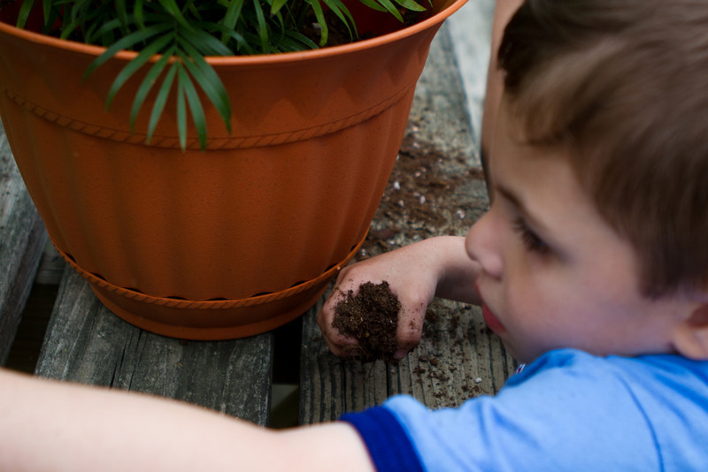 Helping to plant Granny's plant from funeral