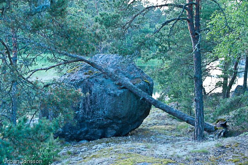 Trollsk skog