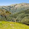 Contrasting hillsides