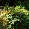 Shade flora