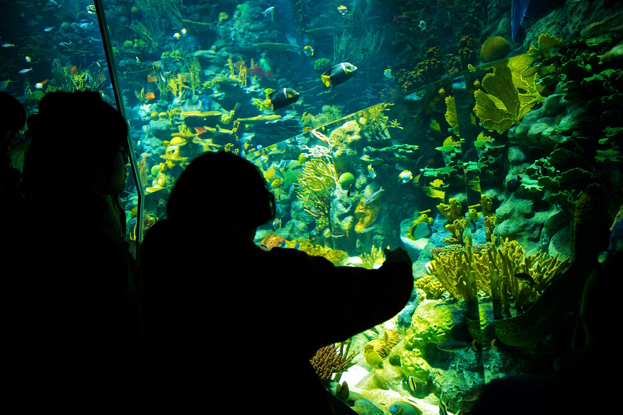 Within the aquarium in Hong Kong's Ocean Park.