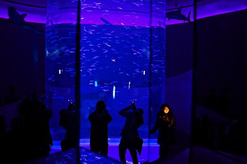 Photographers in the aquarium in Ocean Park.