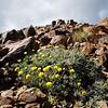 Wildflowers near the summit