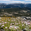 Wildflowers and the high Sierra to the south