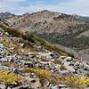 Flowers among the granite