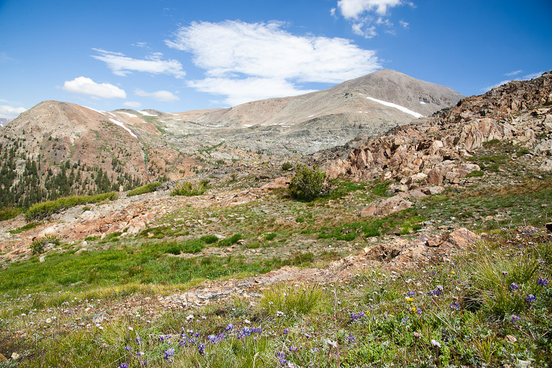 Wildflowers on the shoulder of Mt. Gibbs