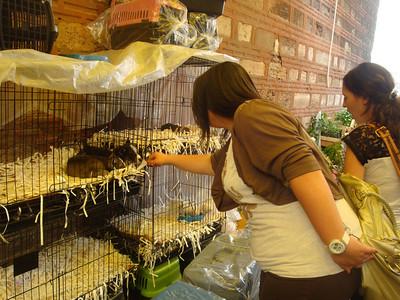 Animal market puppies