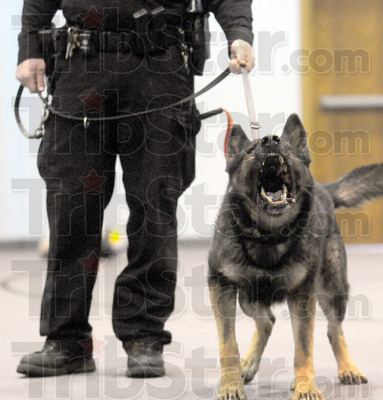 Bark: K-9 Razor barks as a warning of what is about to happen during a training exercise Wednesday afternoon. In this case the bark isn't worse than the bite.