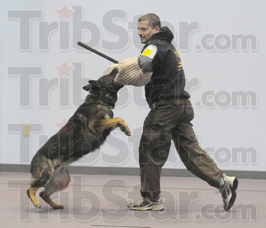 Bite: Razor bites the padded arm of Marshall police officer Jeff Sanders during a training exercise Wednesday afternoon.