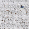 Gravity works: Sledders at Shakamak State Park use the dam of Kickapoo Lake to provide  their Sunday fun.