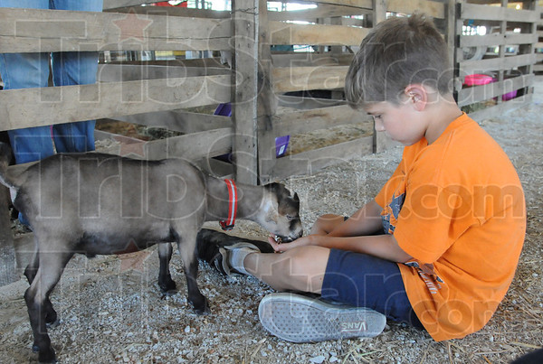 Tribune-Star/Rachel Keyes<br /> Grub time: 4-H Goat Club member Nathanial Michael feeds his Nigerian Dwarf Goat JayZ Sunday at the Vigo County Fair.