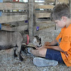 Tribune-Star/Rachel Keyes<br /> Grub time: 4-H Goat Club member Nathanial Michael feeds his Nigerian Dwarf Goat JayZ Sunday at the Vigo County Fair.
