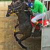 Tribune-Star/Jim Avelis<br /> And they're off: Horses bolt from the starting gate in the fifth race in Martinsville Friday afternoon.
