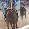 Tribune-Star/Jim Avelis<br /> Hat trick: Camillo Pitty heads to the finish line aboard Spring Recital in the fifth race at Martinsville Friday afternoon. The win was the third of the afternoon for Pitty.