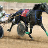 Wire to wire: Freddie Patton Jr. drives Gamble On The Girl to the finish pulling away from the field during Wednesday's Big 10 Two Year Old Pace at the Paris, Illinois fairgrounds. The purse for the event was $7,431.