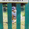 Garden party: Kellog's employee Mildred Grimsley works in the Native American Heirloom Garden at Dobbs Park Friday.