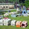 Critter crates: Volunteers from ISU, Union Hospital, Old National Bank and Eli Lilly work cleaning animal crates at the Terre Haute Humane Shelter Friday as part of the Day of Action event.