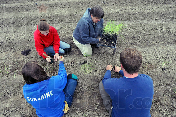 Tribune-Star/Jim Avelis<br /> Teamwork: Working together to plant onion starts are, from top left, Abby Wiles, Sharon Roberts, Matthew Bush and Laura Morningstar.
