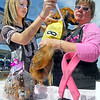 """Race ready: Lindsay and Sally Roetker prepare """"Chopper"""" for his heat race during the Dachshund Dash Saturday morning at the Vigo County Fairgrounds."""