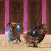 They're off: Two Dachshunds break toward the finish line during heat racing action Saturday.