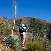Yucca by the trail