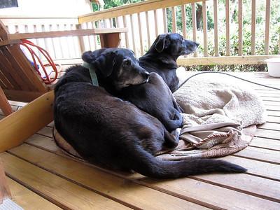Doggie togetherness