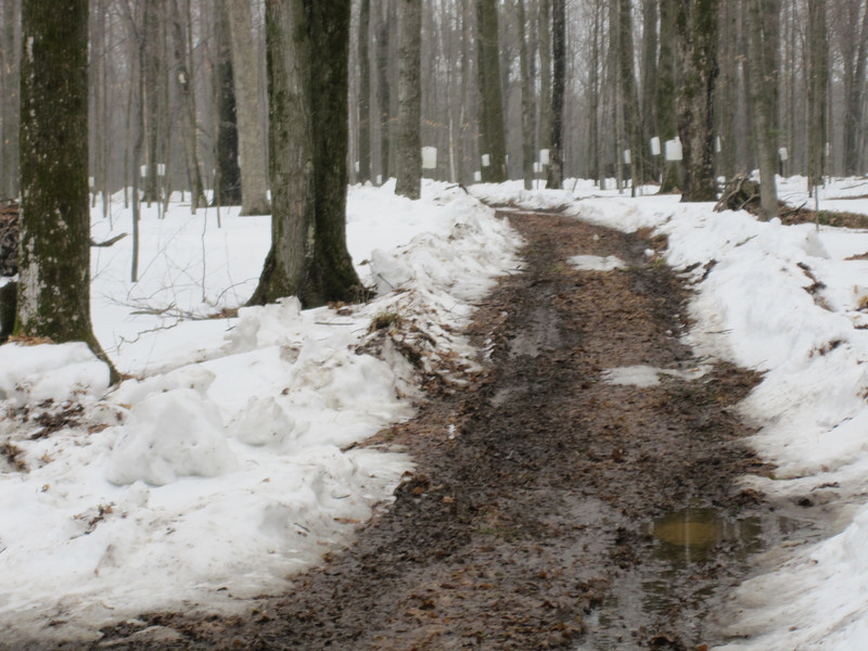 GOLLY..OUR TRAILS SURE GOT MUDDY COLLECTING SAP WITH THE 4-WHEELERS