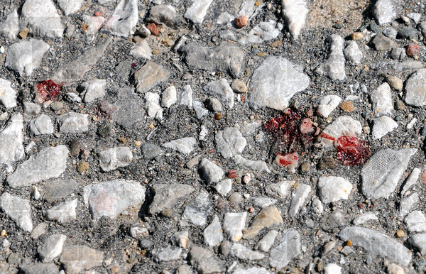 Blood: Detail photo of blood droplets found at the scene of Thursday night's slashing of a Terre Haute police officer.