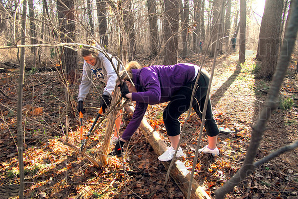 Honeysuckle: Indiana State University students Megan Whitacre and Mieke Tackett work removing Honeysuckle from the Dobbs Park woods Saturday morning.