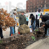 Can you dig it: A group of volunteers dig in the flower bed at 5th and Wabash as they prepare to plant a tree Saturday morning.