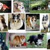 Dogs as of January 2011