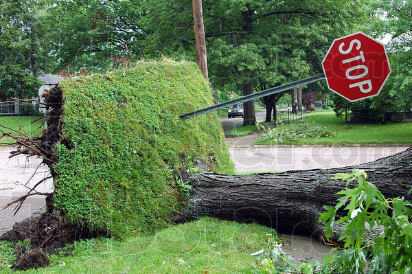 Leaner: A stop sign was ripped from the ground as a large tree near the corner of 10th Street and Indiana Avenue was blown over by high winds during overnight storms.