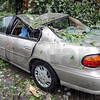 Crushed: A vehicle on north 11th street in the Collett Park area was destroyed by a falling tree Thursday.