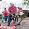 Volunteers: Gary Buck pours pink paint onto the intersection of 6th and Wabash Avenues Wednesday evening as volunteers repaint the pink ribbon.