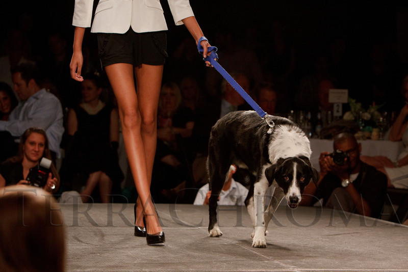 """(Denver, Colorado, May 21, 2011)<br /> Jordan Casey with Rocket.  Mutts and Models fashion show, themed """"Breakfast at Sniffany's,"""" at Exdo Event Center in Denver, Colorado, on Saturday, May 21, 2011.<br /> STEVE PETERSON"""