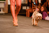 "(Denver, Colorado, May 21, 2011)<br /> Melody Mendez with Ike.  Mutts and Models fashion show, themed ""Breakfast at Sniffany's,"" at Exdo Event Center in Denver, Colorado, on Saturday, May 21, 2011.<br /> STEVE PETERSON"