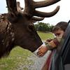 oh, just feeding a reindeer.....