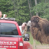 who can say they have a picture with a camel?!