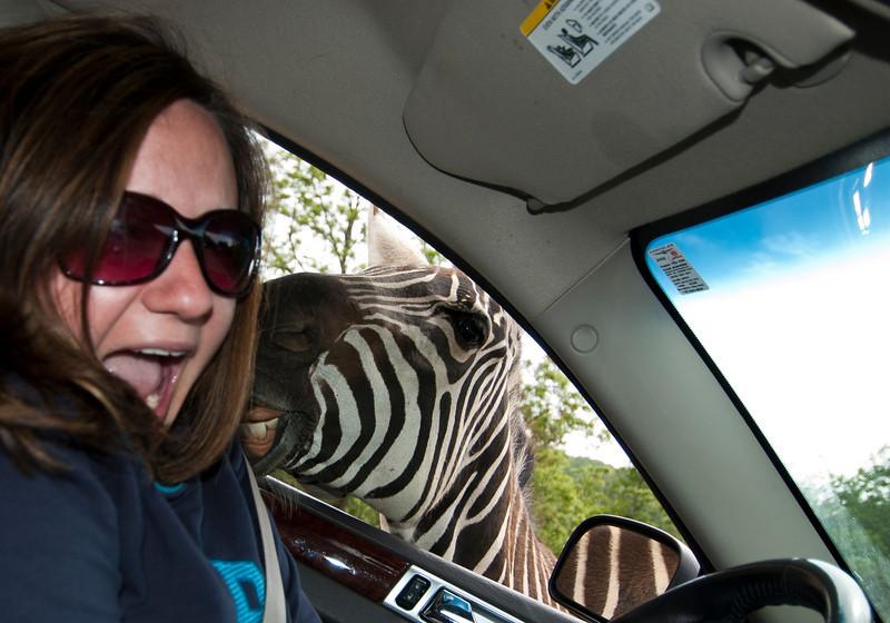 zebra photo crasher