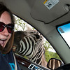 zebra photo crasher
