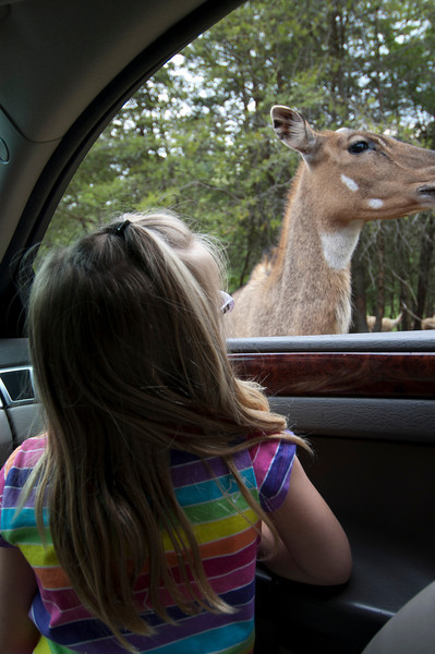 Clare wouldn't roll down her window the first ride through the park....and only fed the deer on the next go.