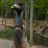The ostrich's were mean....