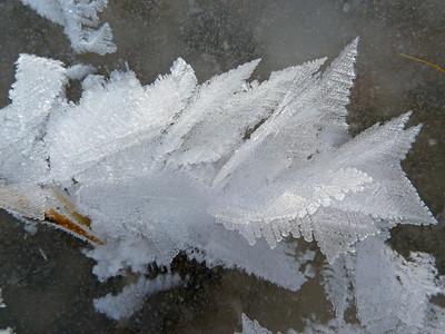 Fantastic Angel Wing ice crystals at Mono Lake.